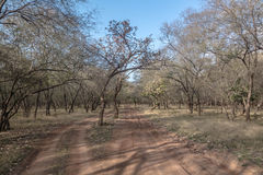 Trockener Wald im ranthambore Lizenzfreie Stockfotos