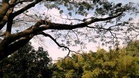 Trockener Wald und kleine Tiere Stockfoto