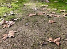Trockener Weg von Blättern und von Gras stockfotografie