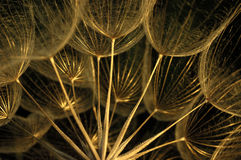 Trockener Wildflower Lizenzfreies Stockfoto