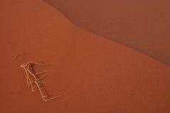 Trockener Zweig in der sandigen Wüste. Lizenzfreie Stockfotografie