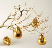 Trockener Zweig mit goldenen Birnen Stockbild