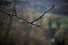 Trockener Zweig mit Spinnenfliesen stockfotos