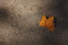 Trockenes Ahornblatt auf dem Asphalt Stockfotos