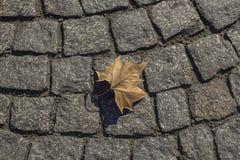 Trockenes Ahornblatt auf der Pflasterung in Paris stockfoto