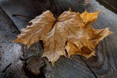 Trockenes Ahornblatt auf einem Brett Lizenzfreies Stockbild