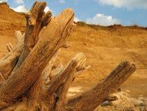 Trockenes Baumkabel Stockfoto