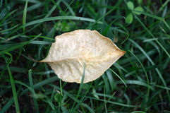 Trockenes Blatt auf dem Gras Stockbild