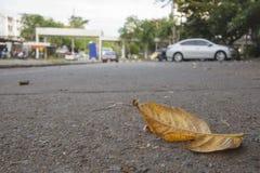 Trockenes Blatt auf der Straße Stockfotografie