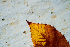 Trockenes Blatt auf einem Beton Stockbilder