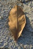 Trockenes Blatt auf trockenem Boden lizenzfreie stockfotos