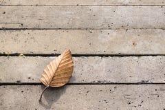 Trockenes Blatt Browns auf konkretem Boden für Hintergrund, haben Raum für Lizenzfreies Stockfoto
