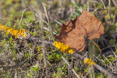 Trockenes Blatt des Herbstes im Wald Stockbild