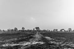 Trockenes Feld Stockbild