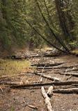 Trockenes Fluss-Bett Stockfoto