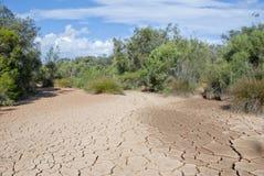 Trockenes Flussbett mit Anlagen lizenzfreie stockfotos