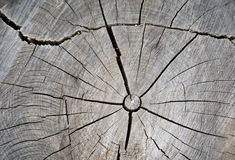 Trockenes gebrochenes Holz Stockfoto