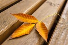 Trockenes gefallenes Herbstblatt auf der Bank stockbild