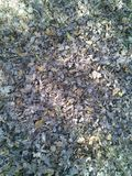 Trockenes Gelb verlässt, das der Wind in einer Luft nahe der goldenen Eichenwaldung dreht Stockbild