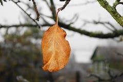 trockenes gelbes Blatt des letzten Herbstes auf einem Apfelbaumast stockbild