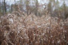 Trockenes gelocktes Gras lizenzfreies stockbild