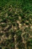Trockenes Gras Lizenzfreies Stockbild