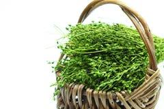Trockenes Gras. Stockbild