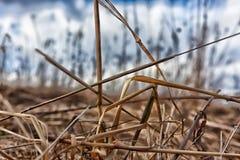 Trockenes Gras Stockbild