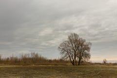 Trockenes Gras auf einem Gebiet im Vorfrühling Stockbilder