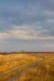 Trockenes Gras auf einem Gebiet im Vorfrühling Stockfoto