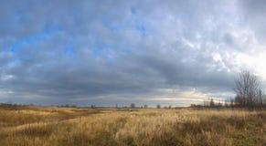 Trockenes Gras auf einem Gebiet im Vorfrühling Stockfotos
