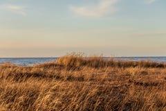 Trockenes Gras auf ruhigem Ostseehintergrund in der goldenen Stunde stockfoto