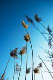 Trockenes Gras Blauer Himmel traum Lizenzfreie Stockfotos