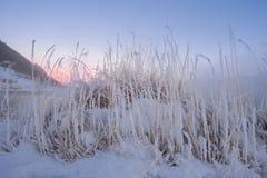 Trockenes Gras, das in Norwegen liegt Stockfotos