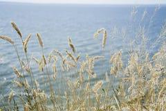 Trockenes Gras des Fokus, unscharfes Meer auf Hintergrund, Kopienraum Natur, Sommer, Graskonzept stockbild