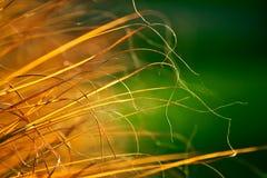 Trockenes Gras des Herbstes Stockbilder