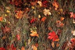 Trockenes Gras des Herbstlaubs Autumn Colors lizenzfreies stockfoto