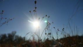 Trockenes Gras des Winterschattenbildes in der Schneeweidelandschafts-Schneenatur stock video