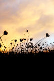 Trockenes Gras, drastischer bewölkter Himmel als Hintergrund Stockfoto