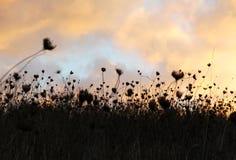 Trockenes Gras, drastischer bewölkter Himmel als Hintergrund Stockbild