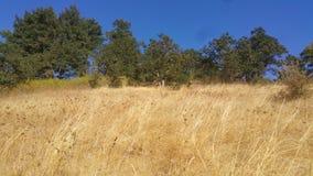 Trockenes Gras Eugene lizenzfreies stockbild