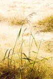Trockenes Gras-Feld stockfotografie