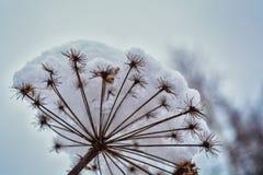 Trockenes Gras im Reif unter dem Schnee im Wald Lizenzfreie Stockfotografie