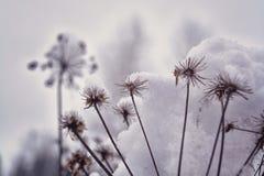 Trockenes Gras im Reif unter dem Schnee im Wald Stockfotos