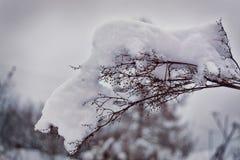 Trockenes Gras im Reif unter dem Schnee im Wald Lizenzfreies Stockbild