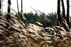 Trockenes Gras im Wald bei Sonnenuntergang in der warmen Sonne Stockfotos