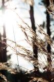 Trockenes Gras im Wald bei Sonnenuntergang in der warmen Sonne Lizenzfreie Stockfotografie