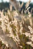 Trockenes Gras im Wald bei Sonnenuntergang in der warmen Sonne Lizenzfreies Stockfoto
