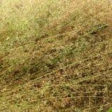 Trockenes Gras mit Regentropfen Lizenzfreie Stockfotos
