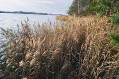 Trockenes Gras nahe Wasser im Wald Stockbild